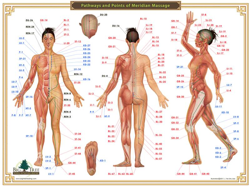 Points and Pathways of Meridian Massage Chart