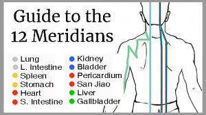 learn 12 meridians online