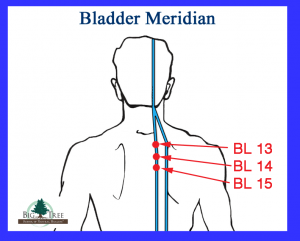 Bladder Meridian Points